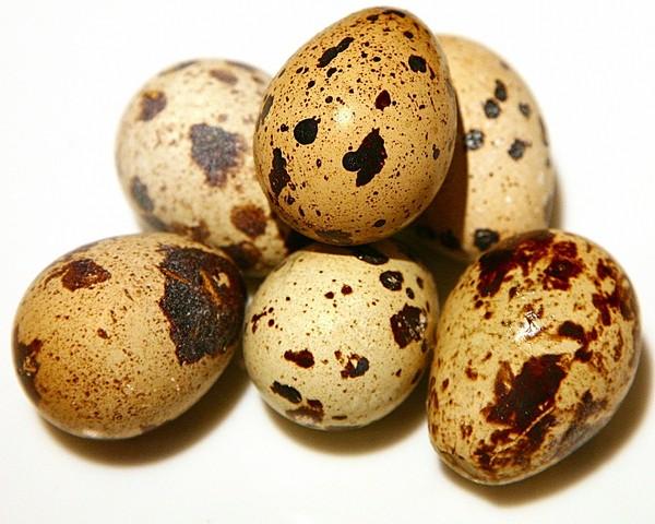 Перепелиные яйца: польза и вред