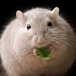 Британские ученые обнаружили гены, приводящие к ожирению