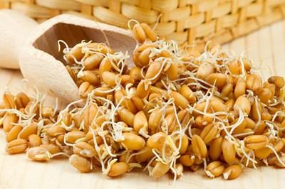 Как готовить пророщеную пшеницу
