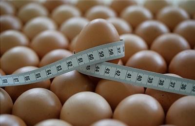 Картинки по запросу Яичная диета на неделю