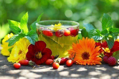 Мелисса: полезные и уникальные свойства растения
