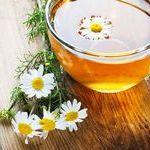 Вкусный и полезный ромашковый чай