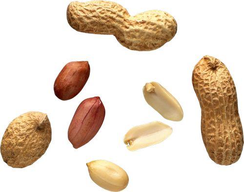 Арахис: польза и вред, калорийность, состав