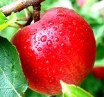 Одно яблоко в день способствует значительному омоложению