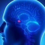 Аппетит можно «отключать» посредством особых клеток мозга