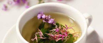 Иван-чай: полезные свойства и противопоказания