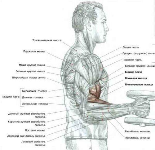 Комплекс домашних упражнений для похудения мужчин