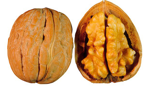 Какие орехи самые полезные?