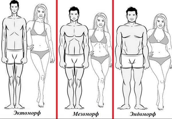 Эктоморф, Мезоморф, Эндоморф - как определить тип телосложения у мужчин и женщин
