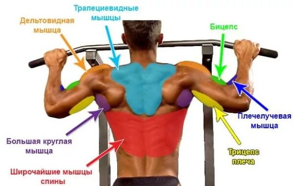 Упражнения на турнике для всех групп мышц