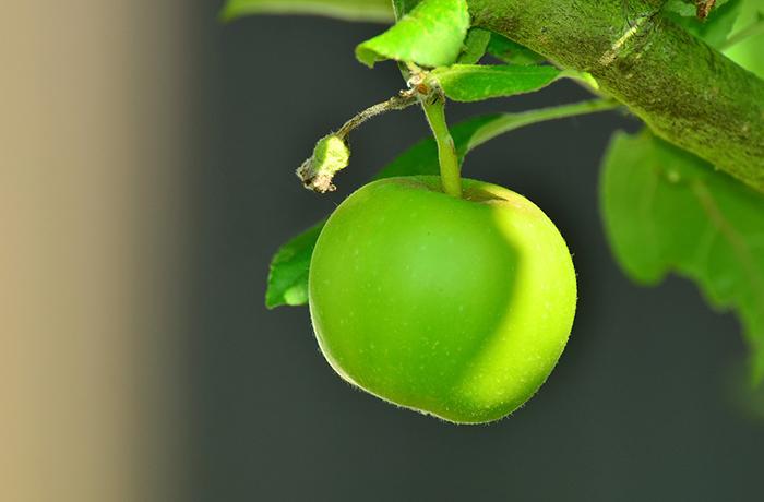 7 продуктов, в которых железа больше, чем в яблоках